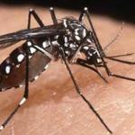 Cuba sin chikungunya en lo que va de 2017
