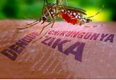 Piden prevenir el zika, chikungunya y dengue