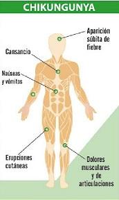 cuadro clínico del chikungunya
