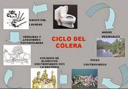 ciclo del cólera