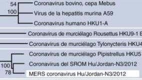 Relaciones filogenéticas de la subfamilia Coronavirinae