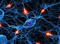 neuronas sistema nervioso dolor