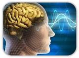 cerebro y visión