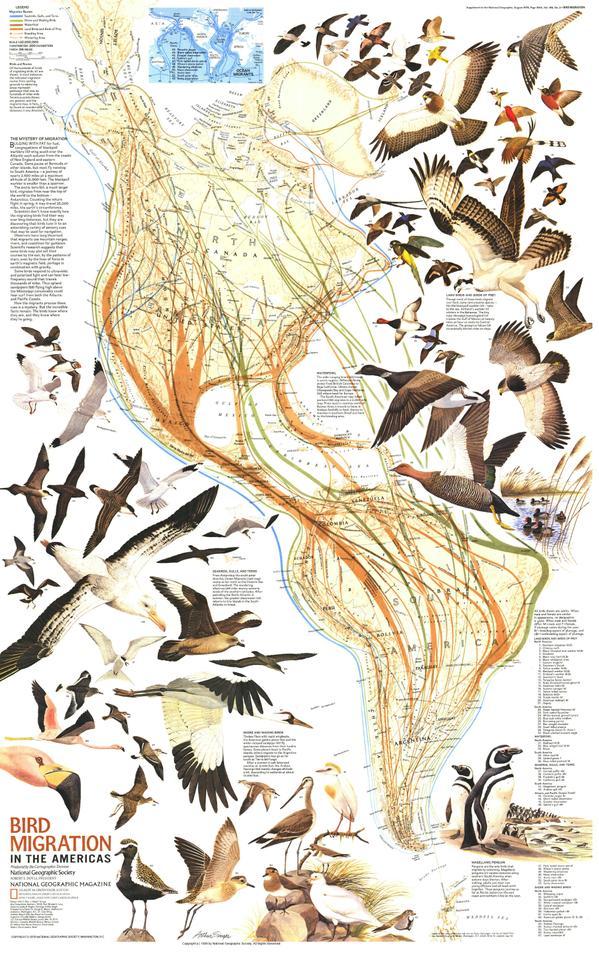 Vias migratorias de las aves