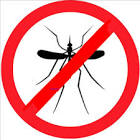 No al Aedes aegipti