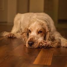 Perro mascota. Fuente: Pxhere
