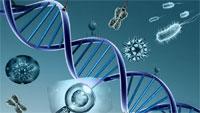 genetica virus
