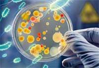 organismos resistentes medicamentos antibióticos microorganismos